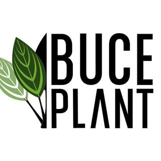 Buce Buce coupons