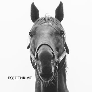 Coupon codes, promos and discounts for equithrive.com