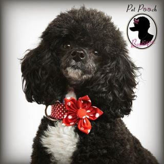 Pet Pooch Boutique coupons