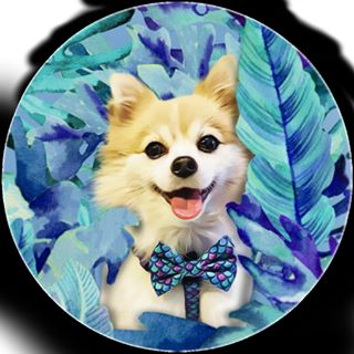 Pet Wallpapers GFX coupons