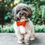 Scottys Bow Ties coupons